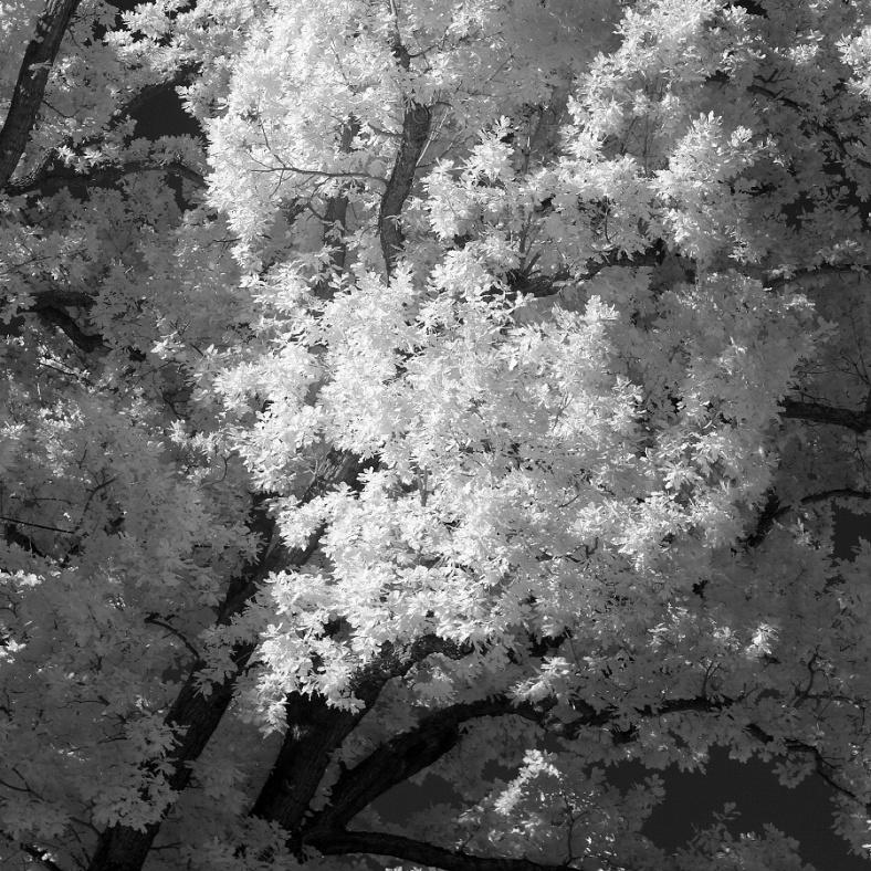 tree1ZOOM